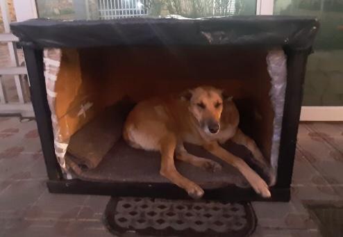 Cadela deitada dentro da caixa, que serve como cama e casinha improvisadas