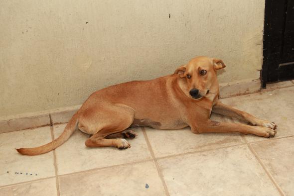 Cachorro adotado em Cuiabá (Foto: Vicente Aquino)