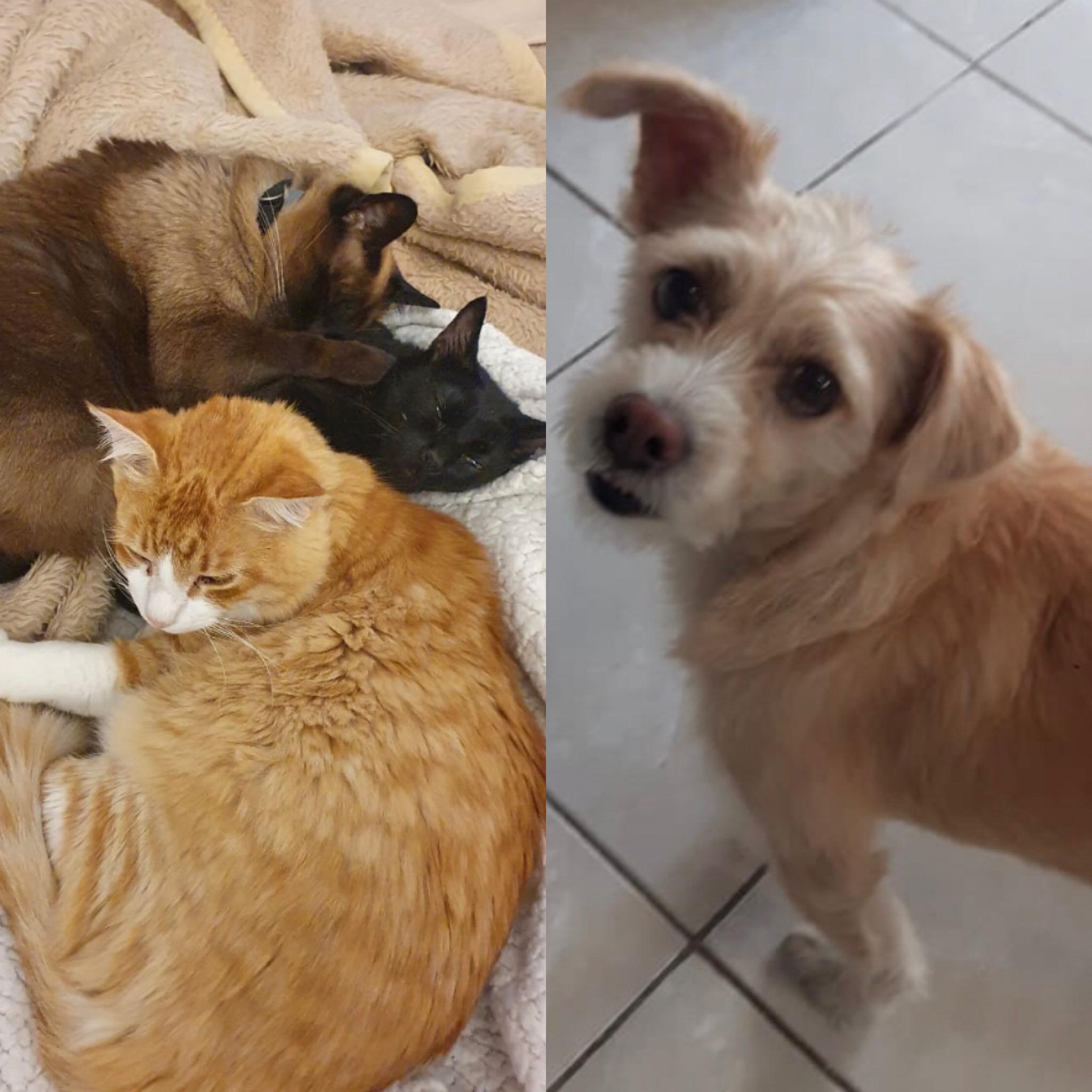 Banguela convive com mais dois gatinhos e o cachorro Estopa (Arquivo Pessoal)